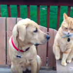 lustige Katzenvideos