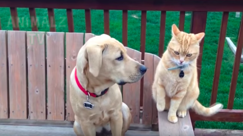 Katzen vs. Hunde.
