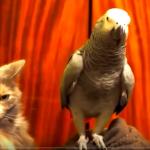 katzen und papageien