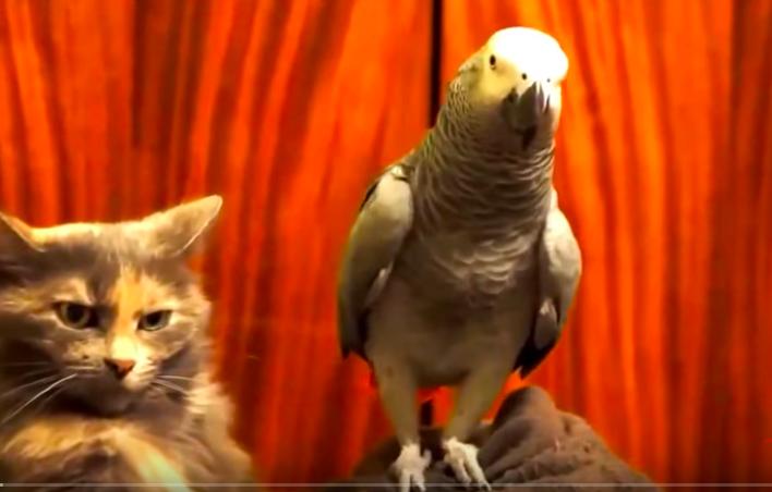 Katze vs. Papagei