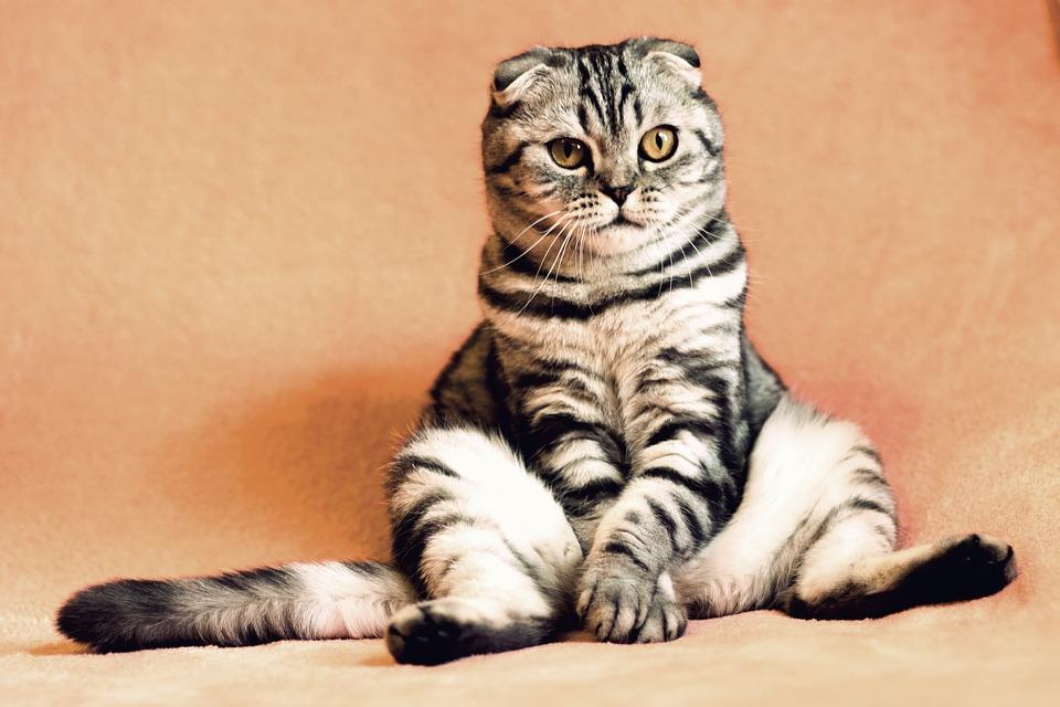 Das Katzenklo. Einer der wichtigsten Orte der Katze