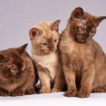 Katzensprache verstehen