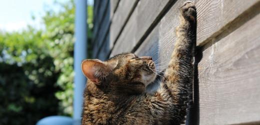 Weshalb Katzen am Kratzbaum kratzen