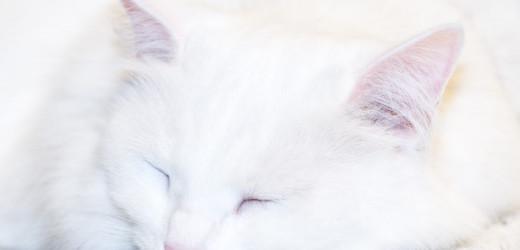 Anifit Test und Kritik. Ein gutes Katzenfutter?