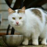 das richtige Katzenfutter