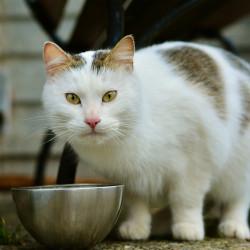 Katzenfutter. Das Etikett richtig lesen und verstehen!