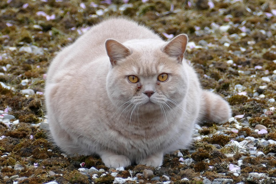 Katze zu dick? Unsere Tipps