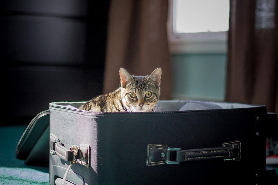Transportbox für Katzen. Worauf achten?