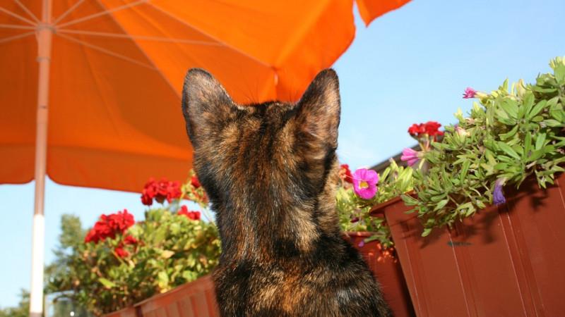 Katzentreppe und Leiter – warum und worauf achten?