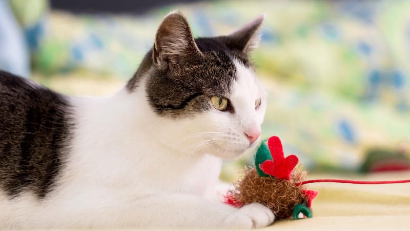 Katzen sinnvoll beschäftigen mit Spielzeug