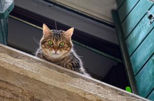 fensterschutz katze