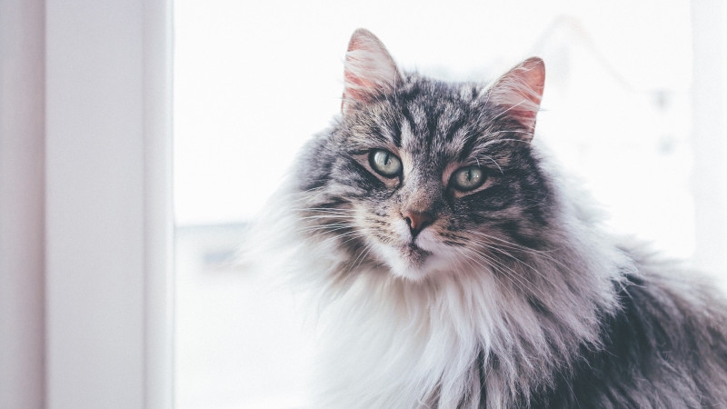 Fensterschutz Katzen- was gilt es zu beachten?