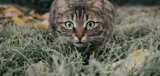 Flöhe bei Katzen: Woher sie kommen, wie sie aussehen – und wie sie wieder gehen