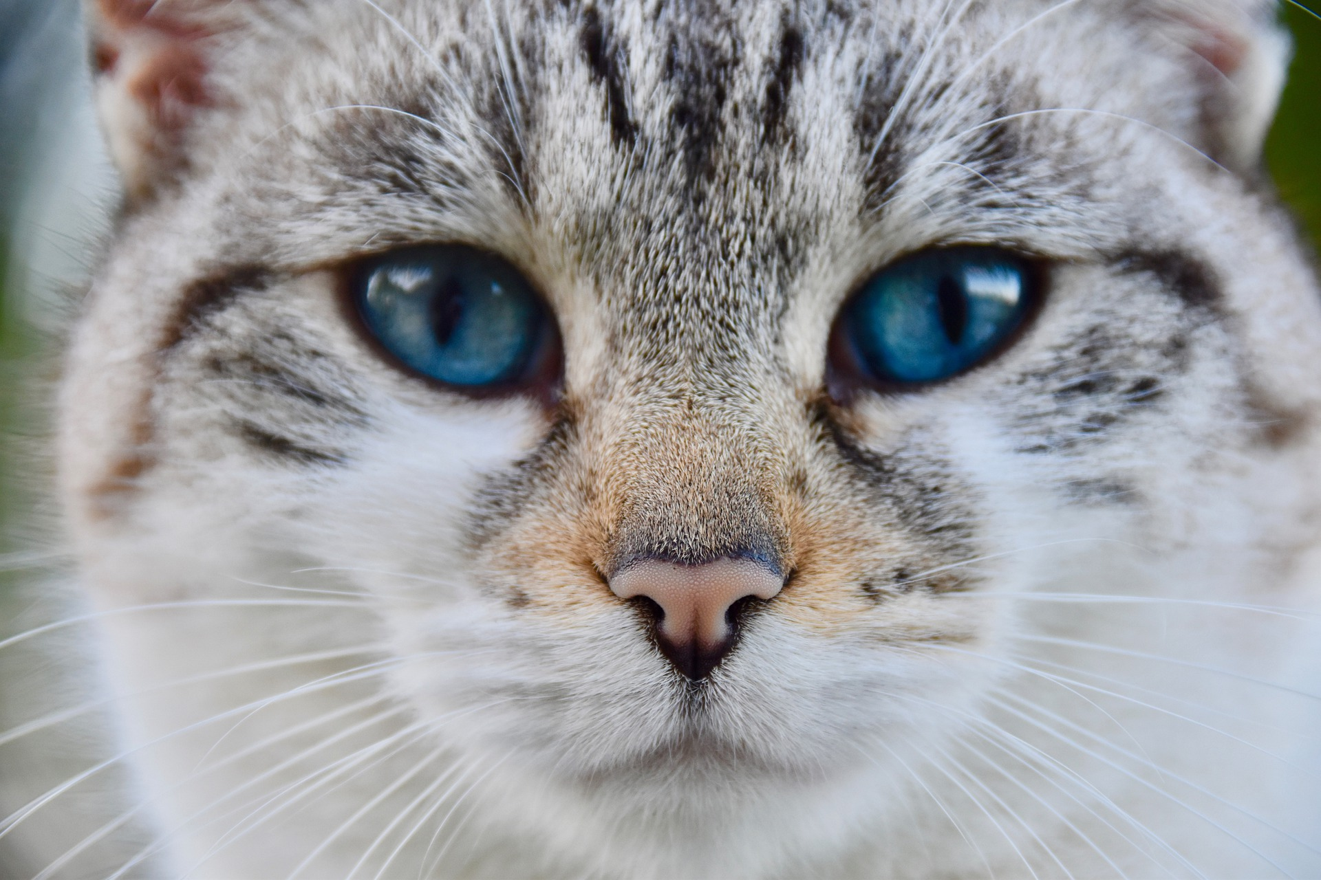 Verschiedene Katzenarten – Welche ist die richtige?